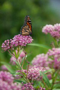 Pollination Celebration Day